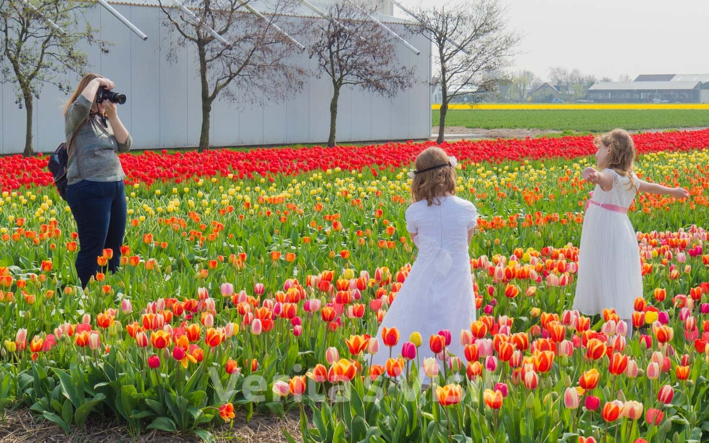 Where to shoot tulip dance movie Keukenhof Amsterdam Verita's Visit Holland