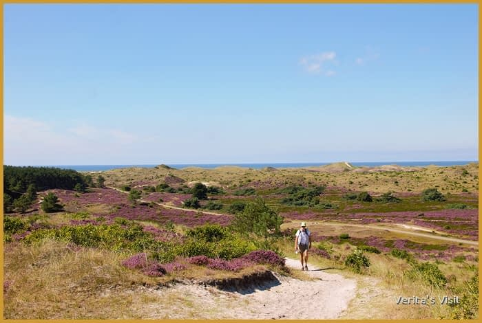 Walking trail through dunes & heather fields